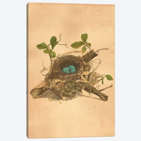 Bird's Nest Canvas Print #SMD10} by Tea Stained Madness Canvas Art Print