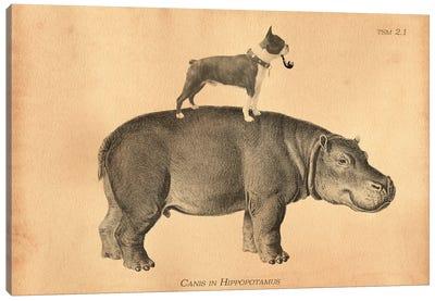 Boston Terrier Hippo Canvas Art Print