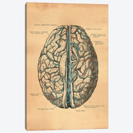 Brain Diagram Canvas Print #SMD23} by Tea Stained Madness Canvas Artwork