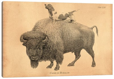 Brown Basset Buffalo Canvas Art Print