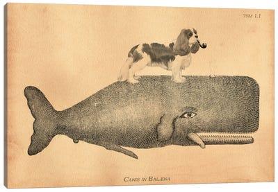 Cavalier King Whale Canvas Art Print