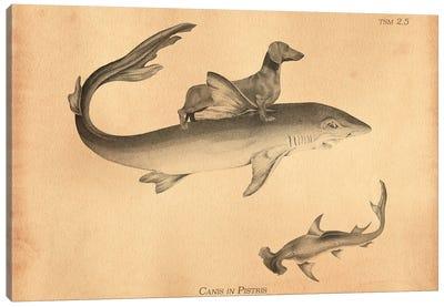 Dachshund Shark Canvas Art Print
