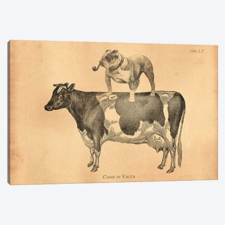 English Bulldog Cow Canvas Print #SMD39} by Tea Stained Madness Canvas Print