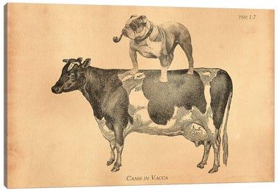 English Bulldog Cow Canvas Art Print
