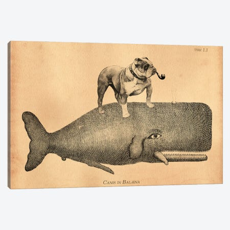 English Bulldog Whale Canvas Print #SMD40} by Tea Stained Madness Canvas Art