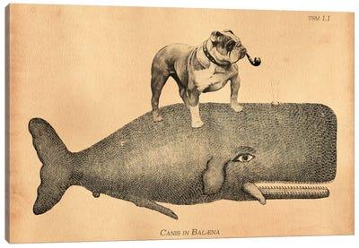 English Bulldog Whale Canvas Art Print