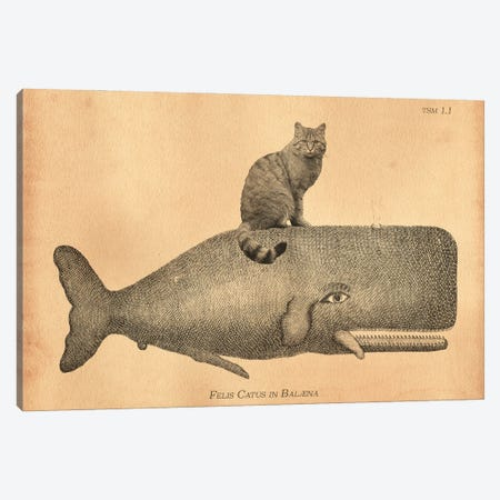 Felis Silvestris Cat Whale Canvas Print #SMD41} by Tea Stained Madness Canvas Wall Art