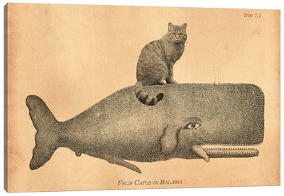 Felis Silvestris Cat Whale Canvas Art Print