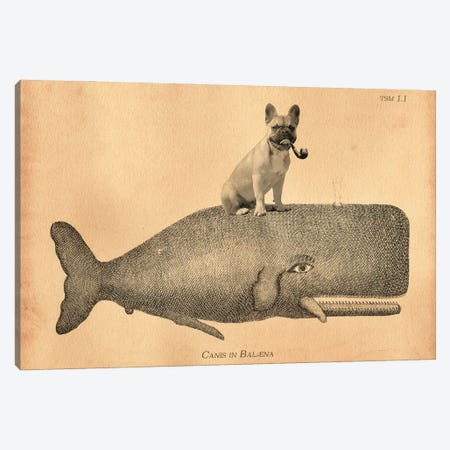 French Bulldog Whale 3-Piece Canvas #SMD44} by Tea Stained Madness Canvas Art Print