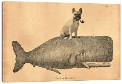 French Bulldog Whale Canvas Art Print