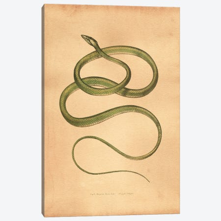 Green Vine Snake Canvas Print #SMD47} by Tea Stained Madness Canvas Art Print