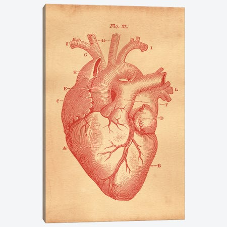 Heart Diagram Canvas Print #SMD49} by Tea Stained Madness Canvas Art