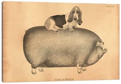 Basset Hound Riding Pig Canvas Art Print