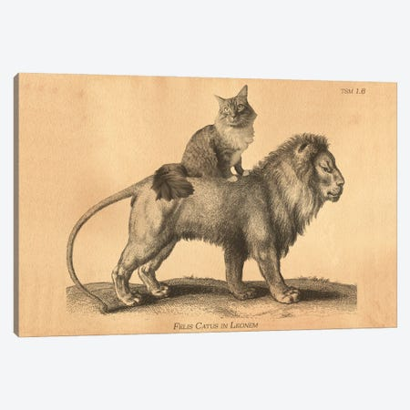 Maine Coon Lion Canvas Print #SMD55} by Tea Stained Madness Canvas Artwork