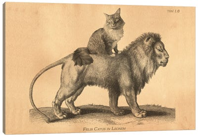 Maine Coon Lion Canvas Art Print