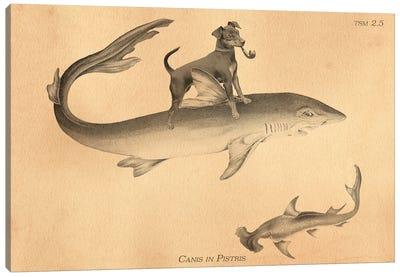 Min Pin Shark Canvas Art Print