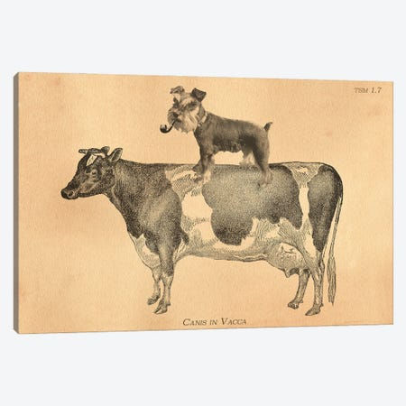Mini Schnauzer Cow Canvas Print #SMD59} by Tea Stained Madness Art Print