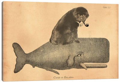 Newfoundland Whale Canvas Art Print