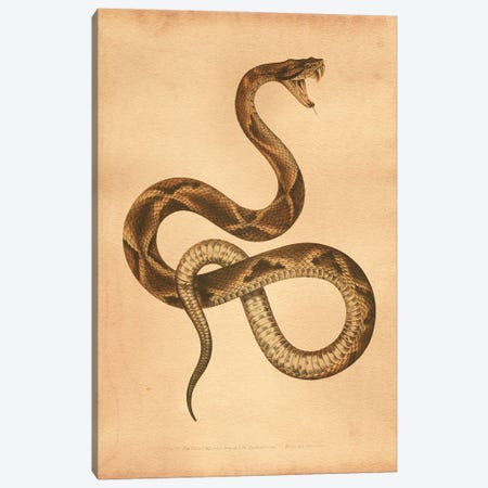 Pit Viper Canvas Print #SMD64} by Tea Stained Madness Art Print