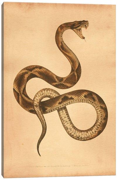 Pit Viper Canvas Art Print