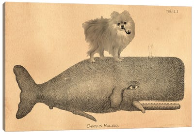 Pomeranian Whale Canvas Art Print