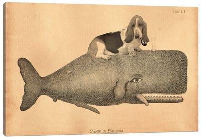 Basset Hound Riding Whale II Canvas Art Print