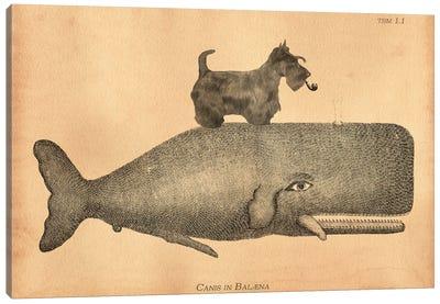 Scottie Whale Canvas Art Print