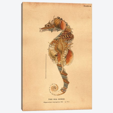 Seahorse Shelled Tea Canvas Print #SMD86} by Tea Stained Madness Art Print