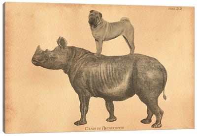 Shar-Pei Rhino Canvas Art Print