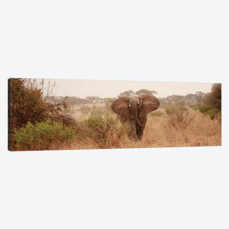 Elephant In The Savannah Canvas Print #SMI10} by Susan Michal Canvas Artwork