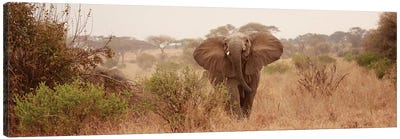 Elephant In The Savannah Canvas Art Print