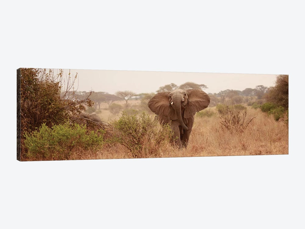Elephant In The Savannah 1-piece Canvas Wall Art
