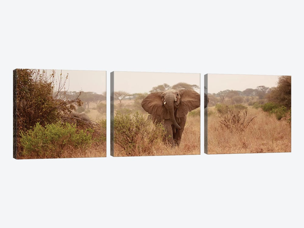 Elephant In The Savannah by Susan Michal 3-piece Canvas Wall Art