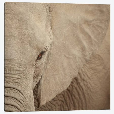 Elephant Up Close Canvas Print #SMI11} by Susan Michal Canvas Wall Art