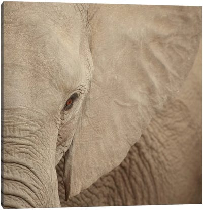 Elephant Up Close Canvas Art Print