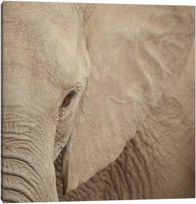 Elephant Up Close Canvas Art Print