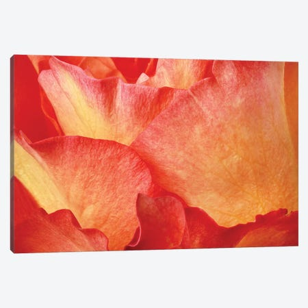 Fire Canvas Print #SMI12} by Susan Michal Canvas Wall Art