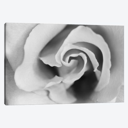 Gentle Rose Canvas Print #SMI13} by Susan Michal Canvas Artwork