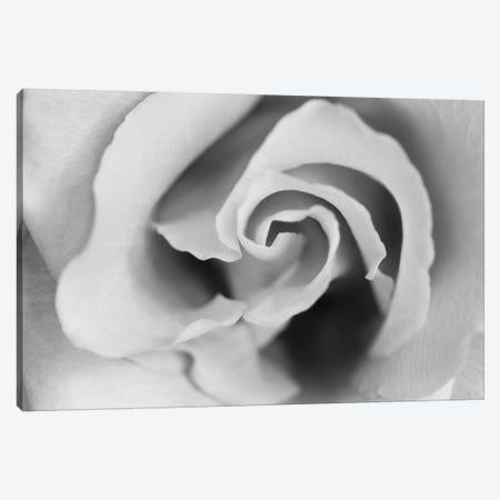Gentle Rose Canvas Print #SMI13} by Susan Michal Canvas Artwork