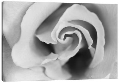 Gentle Rose Canvas Art Print