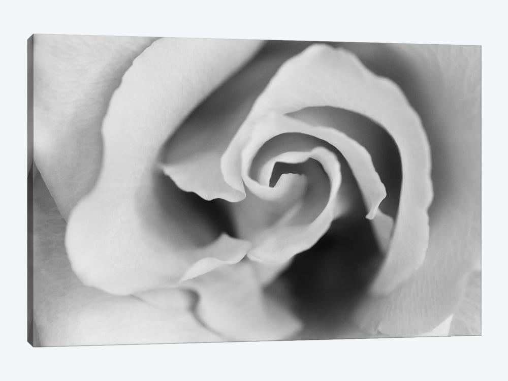 Gentle Rose by Susan Michal 1-piece Canvas Art Print