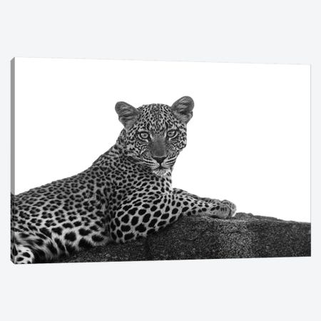 Leopard In Black & White Canvas Print #SMI16} by Susan Michal Canvas Art Print