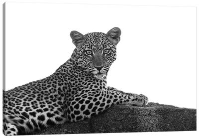 Leopard In Black & White Canvas Art Print