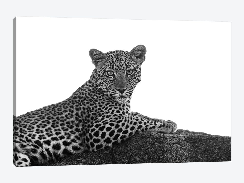 Leopard In Black & White by Susan Michal 1-piece Canvas Art