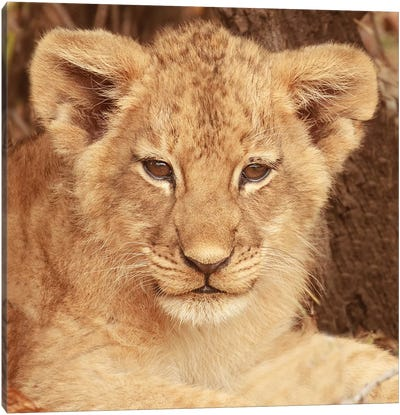 Lion Cub Canvas Art Print
