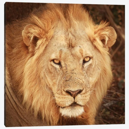Lion Up Close Canvas Print #SMI18} by Susan Michal Canvas Artwork