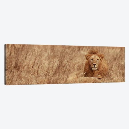 Majestic Lion Canvas Print #SMI19} by Susan Michal Canvas Wall Art