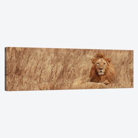 Majestic Lion Canvas Print #SMI19} by Susan Michal Canvas Wall Art