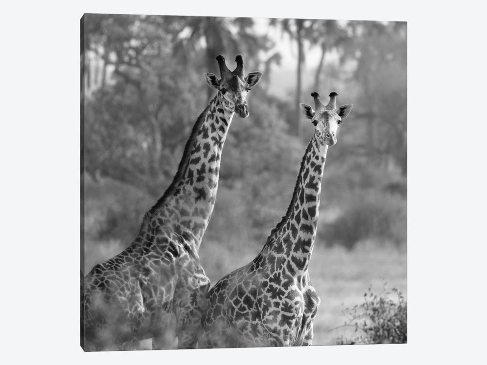 A Pair Of Giraffes by Susan Michal 1-piece Canvas Wall Art