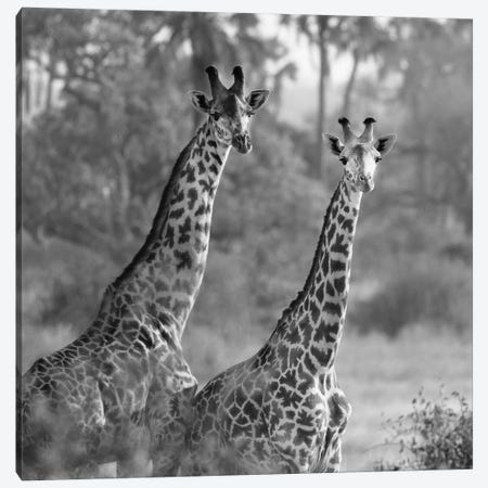 A Pair Of Giraffes Canvas Print #SMI1} by Susan Michal Canvas Wall Art